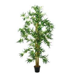 Bambus multi kmen 210cm