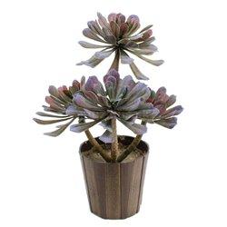 Aeonium rostlina, olivově-zelená, 30 cm