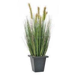 Vodná tráva v kvetináči, 60 cm