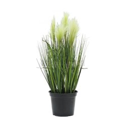 Páperová tráva, 60 cm