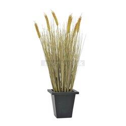 Pšenice ve sklizni v květináči, 60 cm