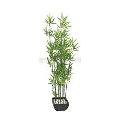 Bambus v květináči, 120cm