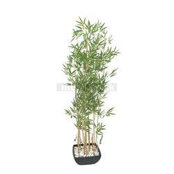 Bambus v květináči, 150cm