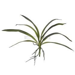 Orchidea listy, zelené, 45 cm