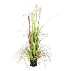 Tráva divoká, 120 cm