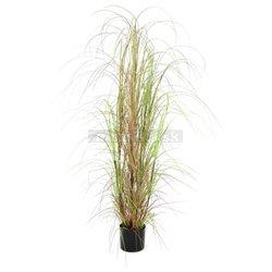 Trs okrasné trávy v kvetináči, 150cm
