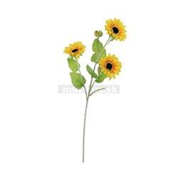Slunečnice, 3 kvítka, 70cm