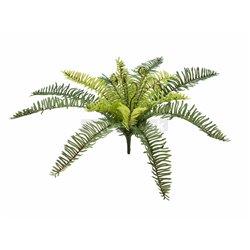 EUROPALMS Forest fern, 30cm