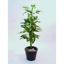 Difenbachia trojitá, 120cm